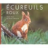 Ecureuils roux coll.portraits nature