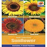 De Ree Sunflower Teddy Bear Evening Sun Dwarf Giant