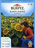 Burpee 44313 Sunflower Sunspot Seed Packet
