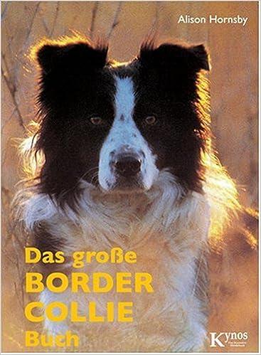 border collie eigenschaften