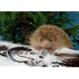 Blonde Hedgehog on Snowy Log Boxed Christmas Cards, 12 Cards
