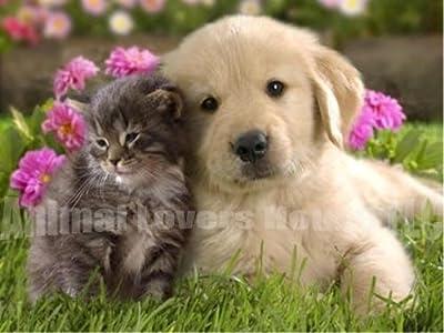 12 Capsules 12 mg Nitenpyram Flea Killing Flea Killer Flea Control capsules for Cats & Dogs 2-25 lbs