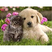by Animal Lovers House LLC  (1)  Buy new:   $14.50
