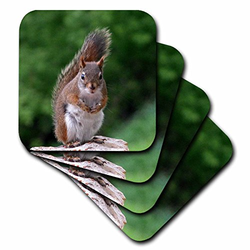 3dRose cst_22427_2 Red Squirrel with Attitude Soft Coasters, Set of 8