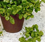 SeeKay American Land Cress Appx 3500 seeds