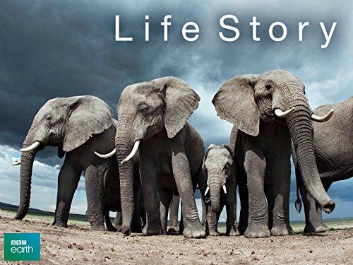Life Story Season 1