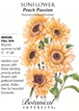 Sunflower Peach Passion Seeds 20 Seeds