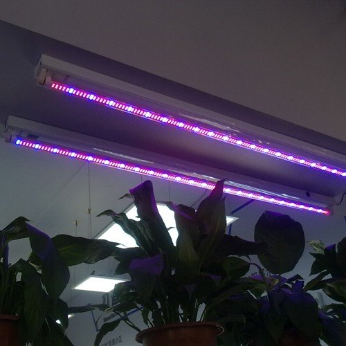 Lighting Ever 4Ft T8 Led Tube, Led Grow Lights, Red & Blue, Plant Grow Lights