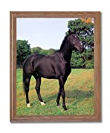 Western Rodeo Cowboy Stallion Horse Animal Home Decor Wall Picture Oak Framed Art Print