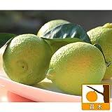カボス:ゆうか5号ポット[レモンの形をしたカボス 柑橘・かんきつ類苗木]