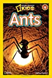 Image of The Ants