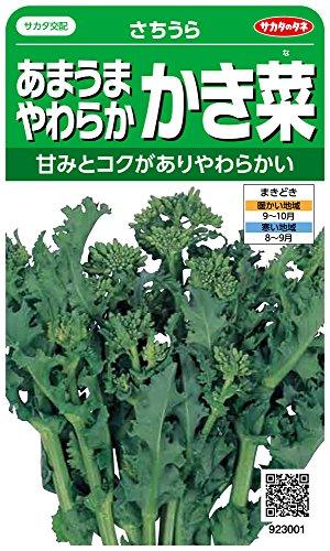 サカタのタネ 実咲野菜3001 あまうまやわらかかき菜 さちうら 00923001