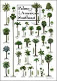"Palms of the American Southeast -- 19"" x 27"" Poster-- Steven M. Lewers"