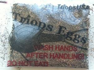 Triops Eggs (packet)