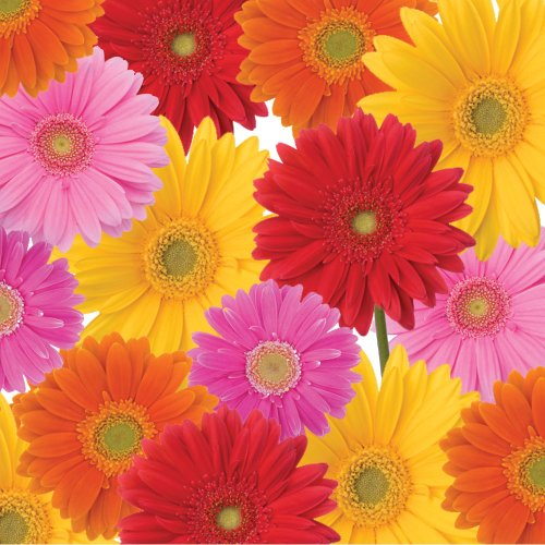 Gerbera Bouquet Lunch Napkins, 3-Ply