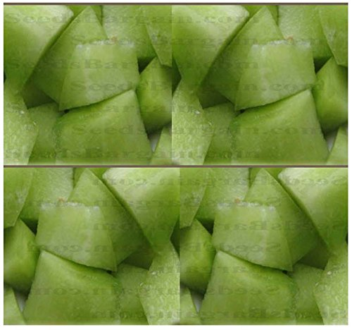 50 X Honey Dew Green Melon - Cantaloupe Seeds ~ High In A, B, And C Vitamins - Honey Sweet Flavor - 105 Days - By Myseeds.Co
