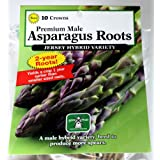 Pack of 10 Premium Male Asparagus Roots - Variety 