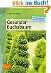 Gesunder Buchsbaum: Krankheiten und S...