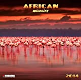 African Wildlife 2014 (What a Wonderful World)
