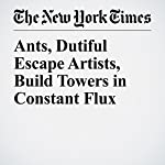 Ants, Dutiful Escape Artists, Build Towers in Constant Flux | James Gorman