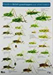 Guide to British Grasshoppers and All...