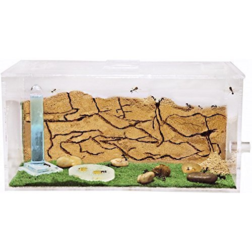mini biosph re selber bauen das eigene kosystem im glas. Black Bedroom Furniture Sets. Home Design Ideas