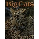 Big Catsby Bruce Mitchell