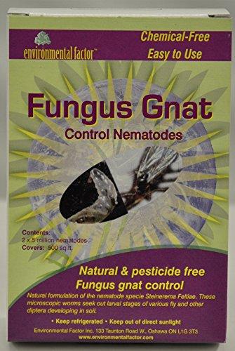 fungus-gnat-control-10-million-nematodes