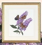 Butterfly Bush, chart - 148002C