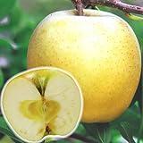 国華園 果樹苗 リンゴ ぐんま名月 1株