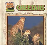 img - for Cheetahs (Big Cats) book / textbook / text book