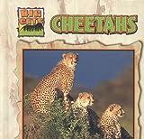 img - for Cheetahs (Abdo Kids: Big Cats) book / textbook / text book