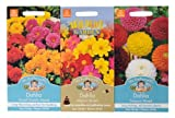 Mr Fothergill's Seeds Dahlia Collection