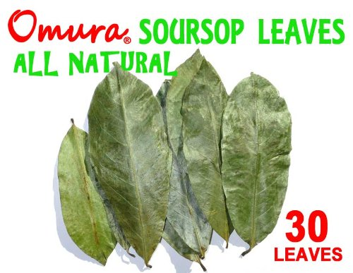 Soursop Leaves (Dried) By Omura Products, Pack 30+ Leaves
