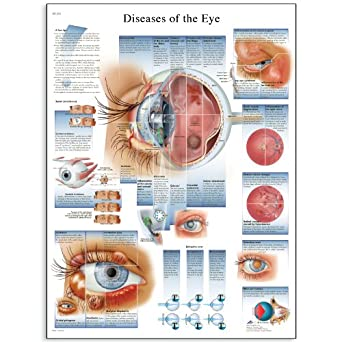 Diagnosing Skin, Eye, Ear, and Throat Disorders