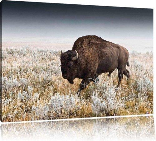 Details infos büffel wiese afrika 100x70cm