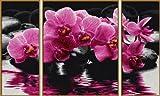 Schipper 609260603 - Malen nach Zahlen - Orchideen (Triptychon), 50x80 cm
