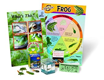 ETA hand2mind Life Cycle of a Frog Kit