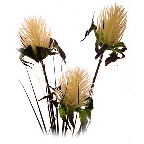 Tillandsia 4 fiori 60 cm crema for Tillandsia prezzo