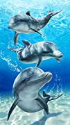 Baron bay dolphins velour brazilian beach towel 3021560 inches