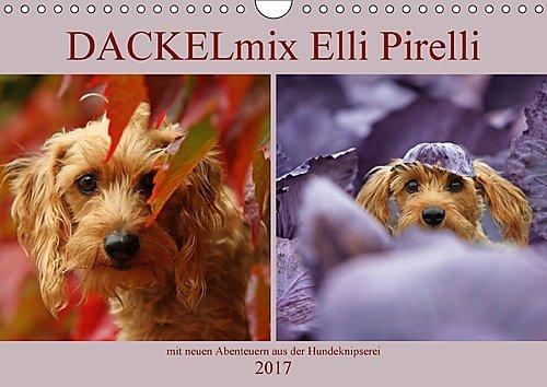 dackelmix-elli-pirelli-wandkalender-2017-din-a4-quer-mit-neuen-abenteuern-aus-der-hundeknipserei-mon