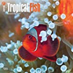 Tropical Fish 2016 Square 12x12 Wall...