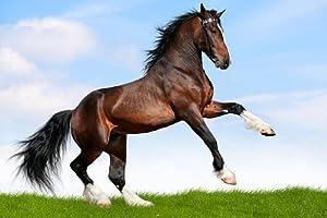 Startonight Nachtleuchtende Leinwandbild Pferd im Galopp 90 cm x 60 cm    Kundenbewertung und Beschreibung