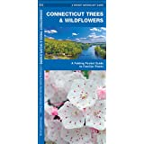 Connecticut Trees & Wildflowers: A Folding Pocket Guide to Familiar Species (Pocket Naturalist Guide Series)
