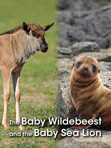 The Baby Wildebeest & The Baby Sea Lion on Amazon Prime Video UK