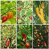 Lawn & Patio - Chili Mix - 6 Arten - scharfe bis extrem scharfe Chili Sorten - je 10 Samen