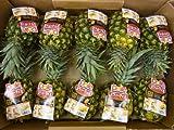 """完熟 黄金パイン """"DOLEスウィーティオパイナップル"""" 10玉入り 約10kg 食べきりサイズ(冷蔵便)"""