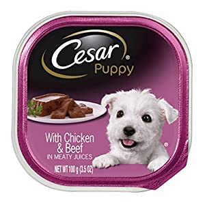 CESAR Canine Cuisine Dog Food Trays, Chicken and Liver, 3.5 Ounce (Pack of 24)