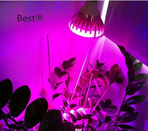 Led Dimmable Bulbs