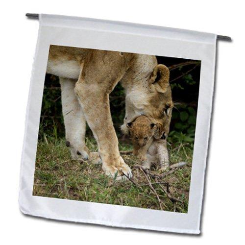 3drose-fl-131877-1-kenya-maasai-mara-reserva-africana-lion-af21-jmc0284-joe-y-bandera-mary-ann-mcdon